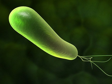 image of Heliobacter