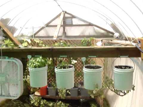 Couple turns swimming pool into aquaponics system to feed for Garden pool aquaponics