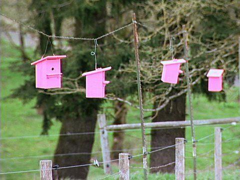 Organic Dairyman: Birdhouses