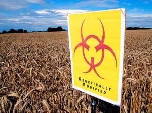 GM-biohazard-300x223