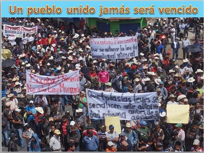 guatemla-gmo-seeds-protests