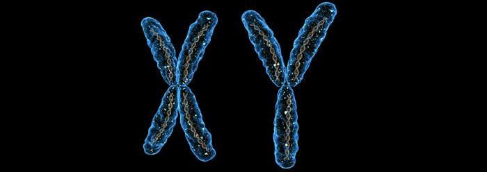 chromosomes_wide