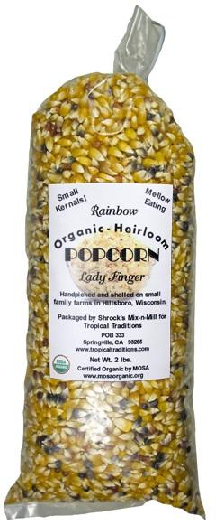 photo of Lady Finger Open Pollinated Rainbow Popcorn