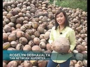 How Coconut Oil Keeps My Kids Healthy