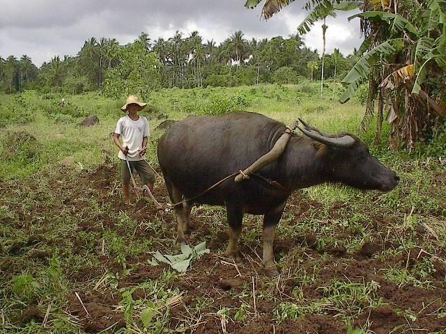 philippine rural farmer