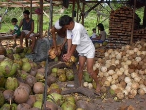 photo by Brian Shilhavy of two men dehusking coconuts