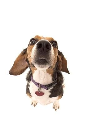 Dog-nose-sniffing