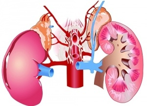 Image of kidneys and adrenal glands