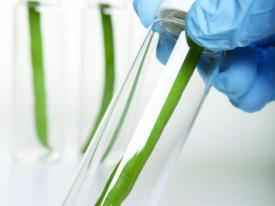 Plant-test-tube_0