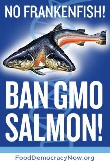 ban_gmo_salmon