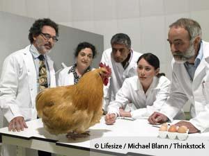livestock-antibiotics