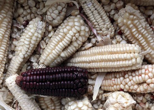 2web_MEXICO-CORN_wide