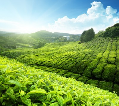 green_tea_health_benefits