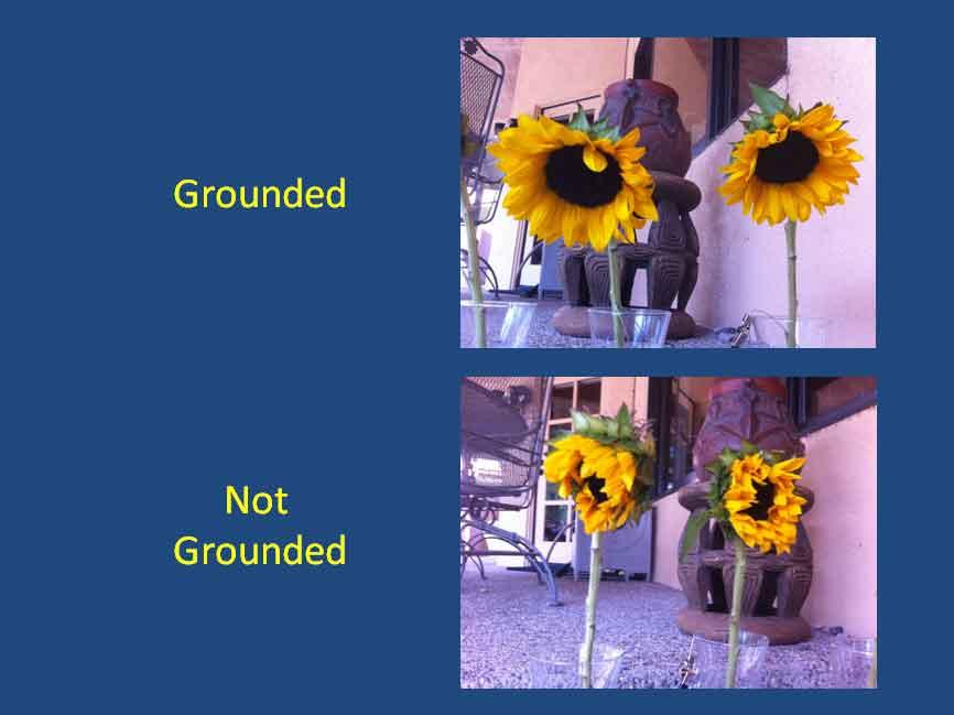 310-sunflower-experiment-03