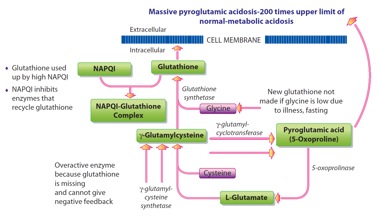 Metabolism-of-GSH-after-exposure_lg