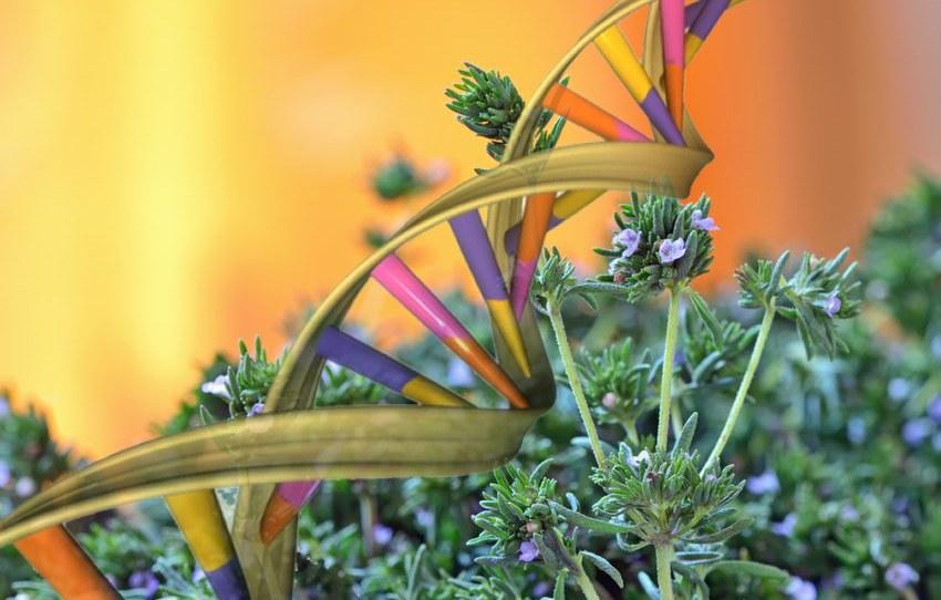 herbal_epigenome_alter