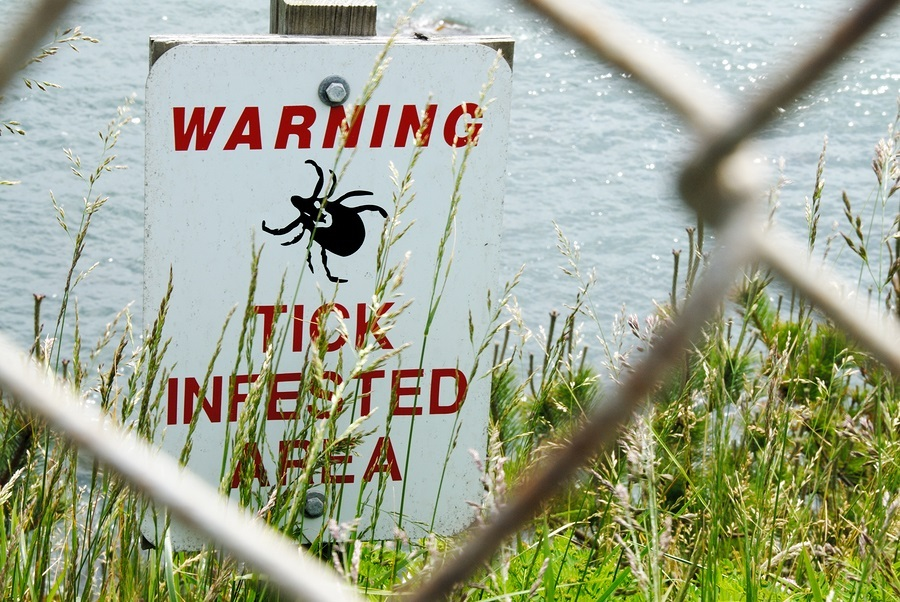 Success Treating Lyme Disease Naturally Without Antibiotic Drugs