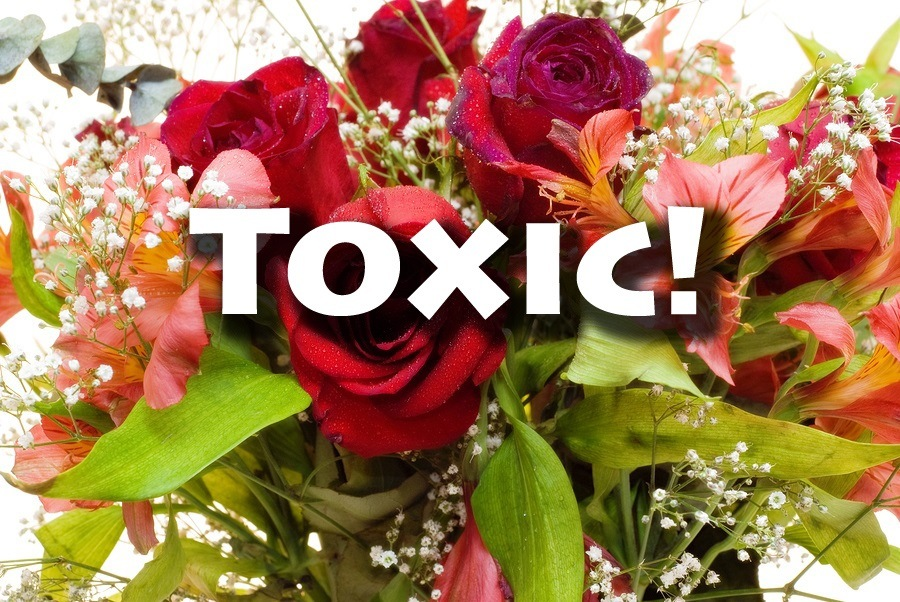 toxic-flowers-image