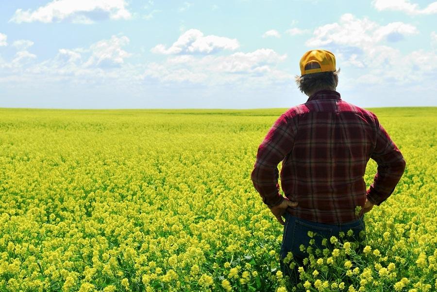 Farmer In Canola Crop