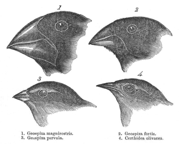 Darwin's finches, which are just varieties/species within a created kind, give no support to microbes to man evolution.
