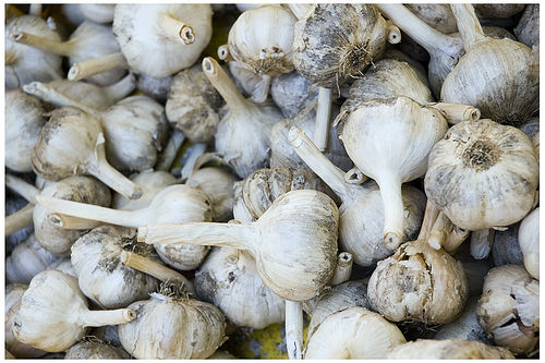 Aged Garlic. Photo by Seth Anderson