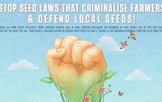 grain-5150-infographic-stop-seed-laws-that-criminalise-farmers-defend-local-seeds-2