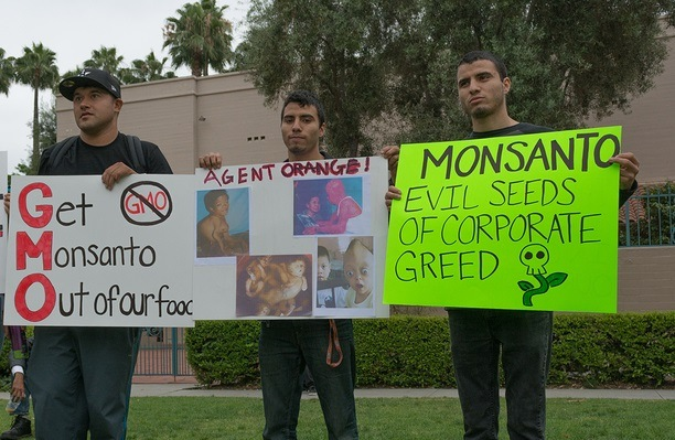 LOS ANGELES CA - MAY 24: Protesters rallied in the streets against the Monsanto corporation. The company is accused of genetically modifying foods unsafely. May 24 2014 in Los Angeles California.