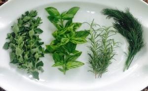 Oregano, Rosemary, Basil and Dill