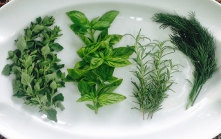 Oregano, Rosemary, Basil and Dill