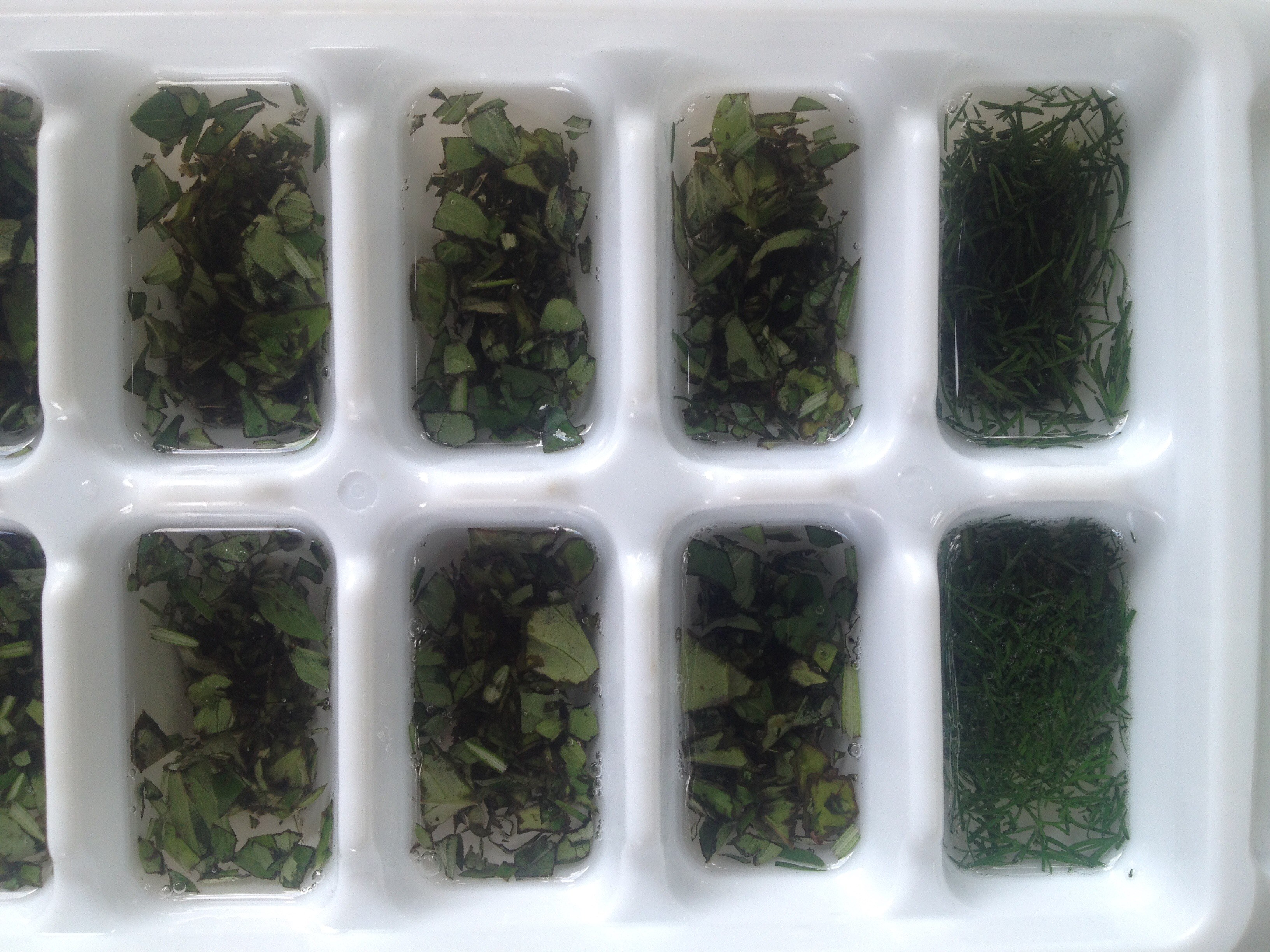 Ready to Freeze Fresh Herbs in Coconut Oil