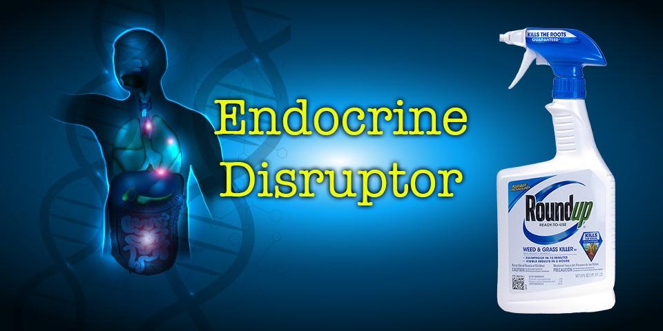 Roundup-endocrine-disruptor-960x480