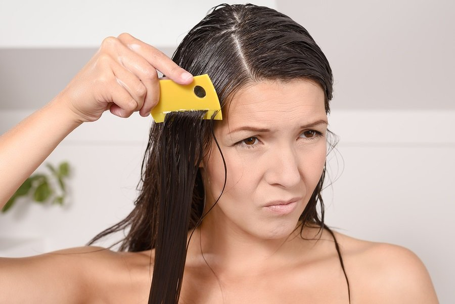 Woman combing out lice in her hair with a lice comb grimacing as she pulls the fine teeth through her long brown tresses to control the contagious infestation of tiny wingless insects