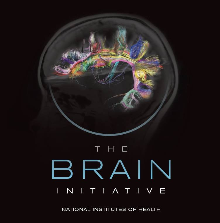 brain-initiative-NIH