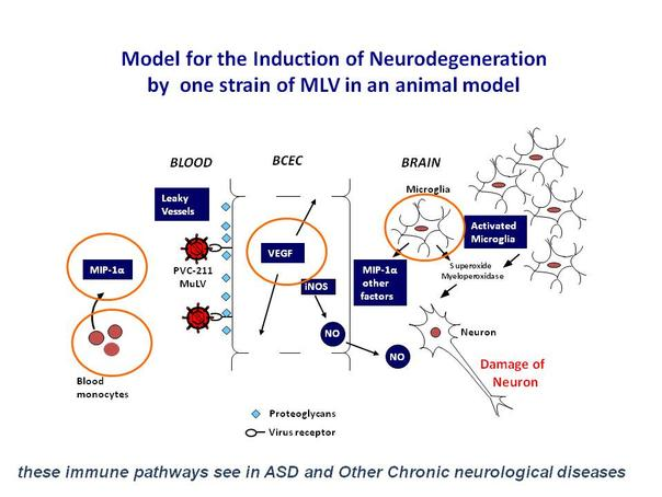 model-for-induction-neurodegeneration