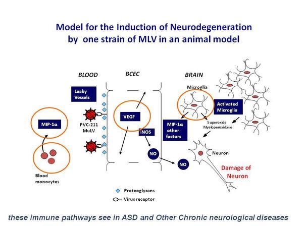 model-for-induction-neurodegeneration