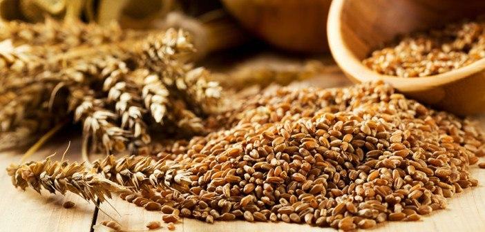 Wheat-germ-web-702x336