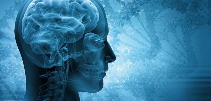 brain-scan-web-702x336