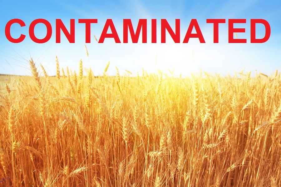 Almost all American Grains Are Contaminated with Glyphosate ...