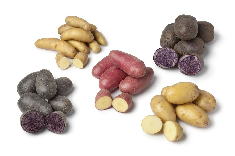 Variety of heirloom gourmet potatoes on white background