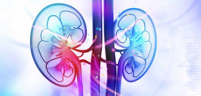 kidney-disease-702x336