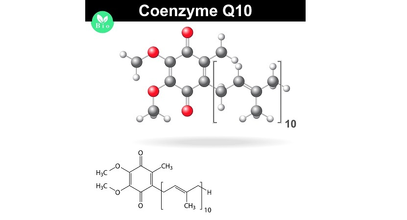 Coenzyme Q10 structural chemical formula and model, 2d & 3d vector, eps 8