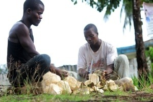 Making-coconut-oil-Liberia2-300x200