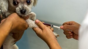 Dog-Get-Vaccinated-FB-300x166