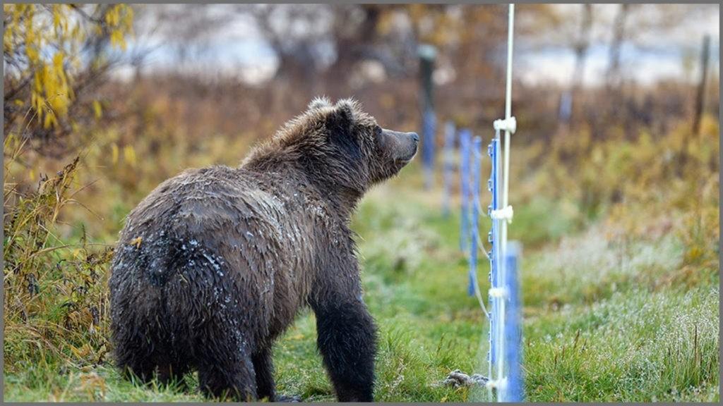 5.-Bear-Shock-1-1024x576