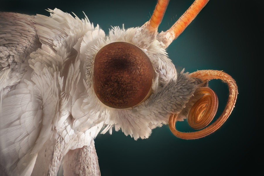 Extra sharp portrait of white moth through a microscope.