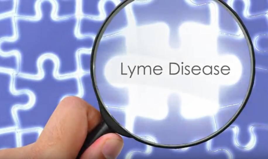 Lyme Disease Piece of Health Puzzle