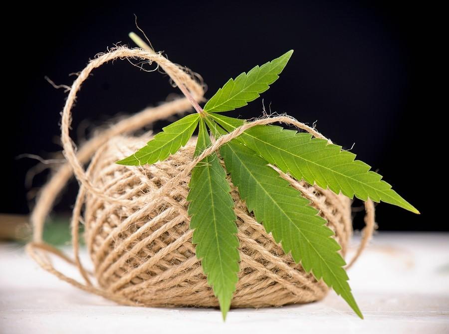 Macro detail of hemp fiber twine and hemp leaf