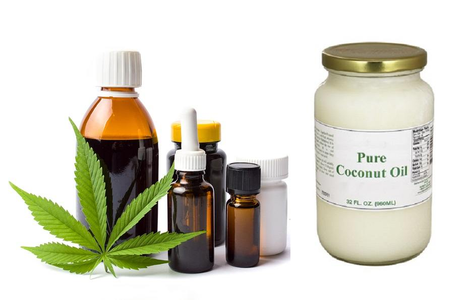 Marijuana plant and cannabis oil bottles with coconut oil isolated