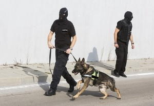 Sofia, Bulgaria - October 27, 2015: Customs officers and their dog are participating in a training for drugs detection in Sofia's airport. The dogs are trained to find drugs smuggled in the luggage.