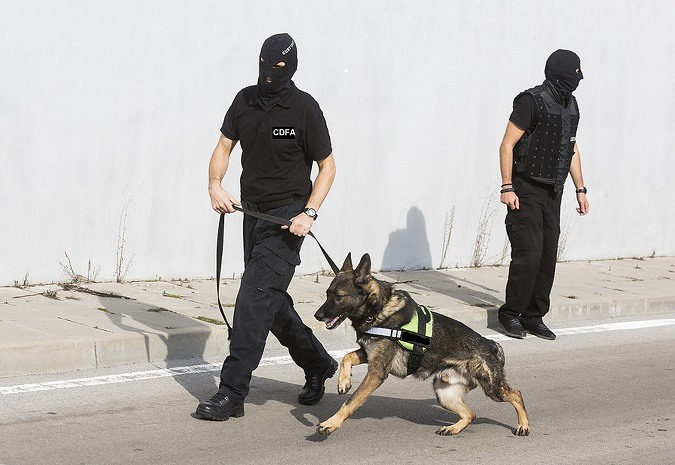 Dog used to sniff out drugs or bombs